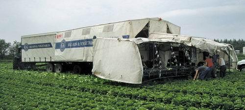 Агромост английской компании VHS (Vegetable Harvesting Systems)