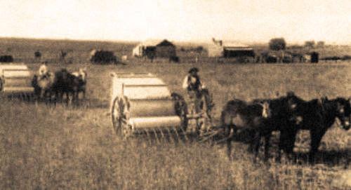 Очесыватели Ридли в поле